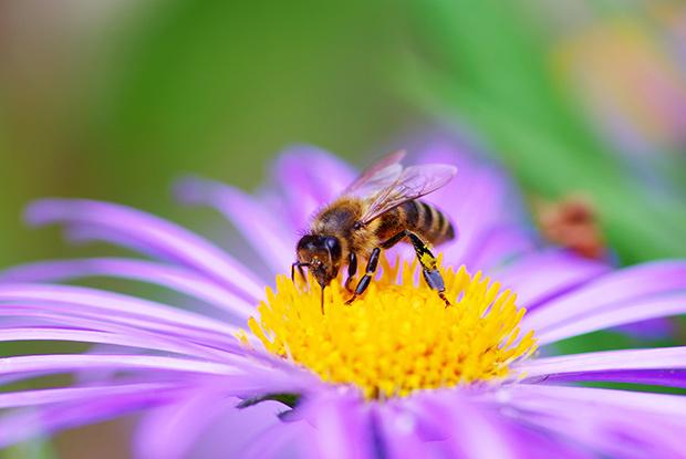Stop neonics abeilles